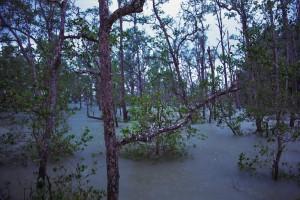 Mangroven im Monsunregen
