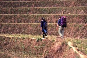 Wanderung durch die Reisterassen