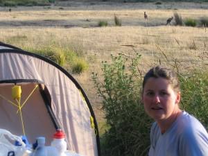 Känguruhs hoppeln beim Abendessen vorbei