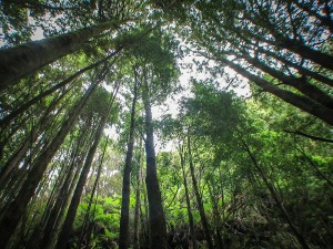 Wälder beim Lake St. Clair
