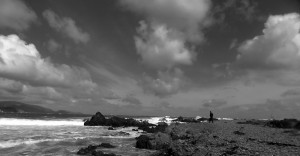 Bucht bei Wellington