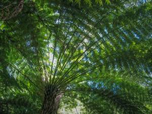 """Farn""""baum"""" im Abel Tasman National Park"""