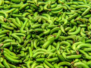 Grüne Bananen